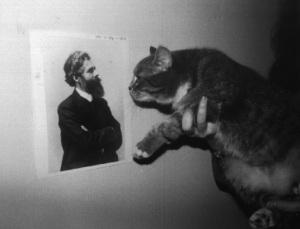 gatto e barbe